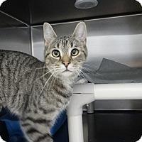 Adopt A Pet :: Nancy - Elyria, OH
