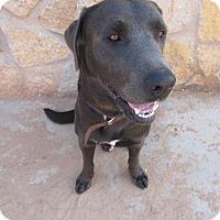 Adopt A Pet :: Sarge - El Paso, TX