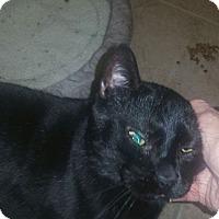 Adopt A Pet :: Toothless - Houston, TX