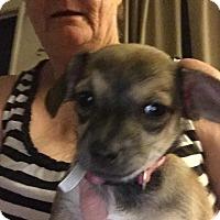 Adopt A Pet :: Carly - Lodi, CA