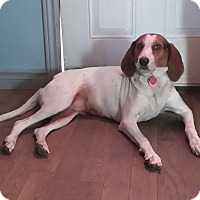 Adopt A Pet :: Lilly - Northumberland, ON