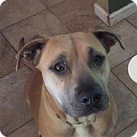 Adopt A Pet :: Gypsy - Salem, OR
