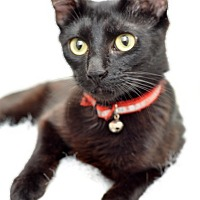 Adopt A Pet :: Blanca - Santa Clarita, CA