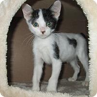 Adopt A Pet :: Chive - San Bernardino, CA