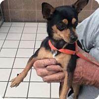 Adopt A Pet :: Stanley - Palm Harbor, FL