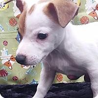 Adopt A Pet :: Jasper - East Sparta, OH