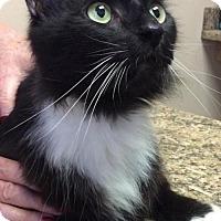 Adopt A Pet :: Yoshi - Raleigh, NC
