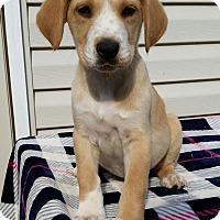 Adopt A Pet :: Paul - New Oxford, PA