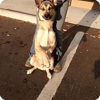 Adopt A Pet :: Hank - Cashiers, NC