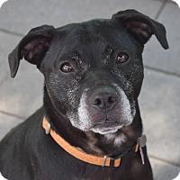 Adopt A Pet :: Rita - Pontiac, MI