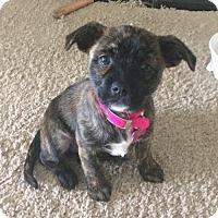 Adopt A Pet :: Princess Ariel - Royal Palm Beach, FL