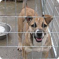 Adopt A Pet :: Tiki - Groton, MA