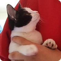 Adopt A Pet :: Sparkie - Austin, TX