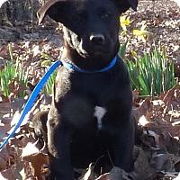 Adopt A Pet :: Adele - Bedminster, NJ