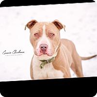 Adopt A Pet :: Hoss - Urgent! - Zanesville, OH