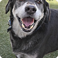 Adopt A Pet :: CK - Youngwood, PA