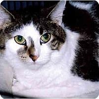 Adopt A Pet :: Gwen - Medway, MA