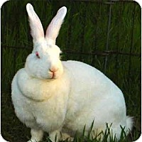 Adopt A Pet :: Ginger - Santee, CA