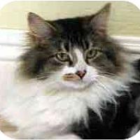 Adopt A Pet :: Melody - Davis, CA