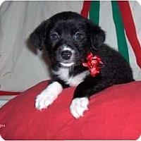 Adopt A Pet :: Rosie - Clayton, OH