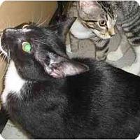 Adopt A Pet :: Scarlett - Jenkintown, PA