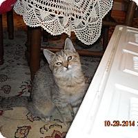 Adopt A Pet :: Lenore - Riverside, RI