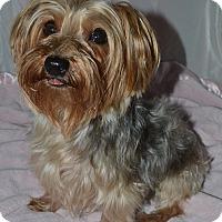 Adopt A Pet :: Sarah - Aurora, CO