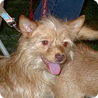 Adopt A Pet :: Hobbs 2015 (m/c) Red Collar - Chesterfield, MI