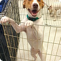 Adopt A Pet :: Hope in CT - East Hartford, CT