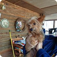 Adopt A Pet :: Prada - Crump, TN