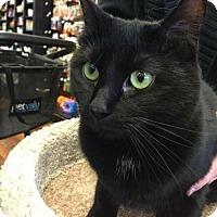 Adopt A Pet :: C-66305 Sabrina ( Petvalu) - Westampton, NJ