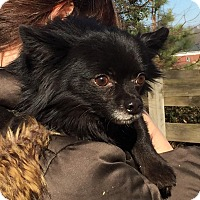 Adopt A Pet :: Deacon - Chicago, IL