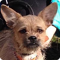 Adopt A Pet :: Eva - Staunton, VA