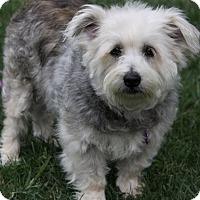 Adopt A Pet :: THEODORA - Newport Beach, CA