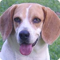 Adopt A Pet :: Wishbone - Staunton, VA
