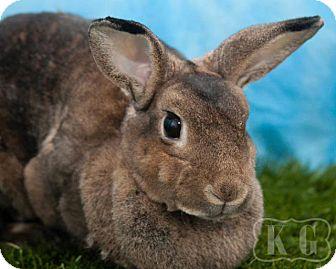 Rex for adoption in Pflugerville, Texas - Cheekis