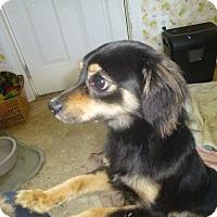 Adopt A Pet :: Styles - Glastonbury, CT