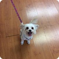 Adopt A Pet :: Sampson - S. Pasedena, FL