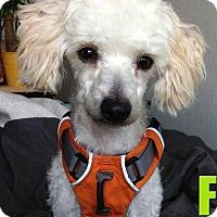 Adopt A Pet :: Fern - Concord, CA