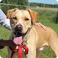 Adopt A Pet :: Buddy-Prison Graduate - Elyria, OH