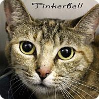 Adopt A Pet :: Tinkerbell - Texarkana, AR