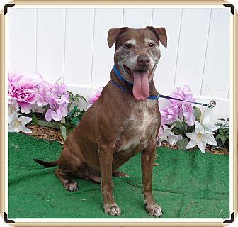 Labrador Retriever Mix Dog for adoption in Marietta, Georgia - OLLIE