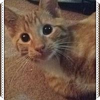 Adopt A Pet :: Simba - Okotoks, AB