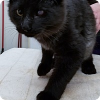 Adopt A Pet :: Antwan - Kalamazoo, MI