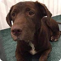 Adopt A Pet :: Hershey #3 - Midlothian, VA