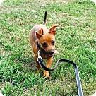 Adopt A Pet :: Elroy Jetson - teeny tiny!!