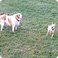 Adopt A Pet :: Buddy & Rocky - Indianola, IA