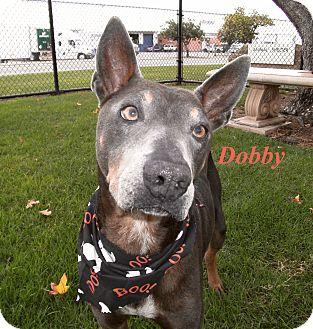 Doberman Pinscher Mix Dog for adoption in El Cajon, California - Dobby