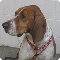 Adopt A Pet :: Lucia - LaGrange, KY