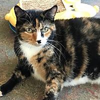 Adopt A Pet :: Specky - Topeka, KS